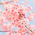 remeis naturals primavera